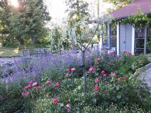 Johans trädgård 2
